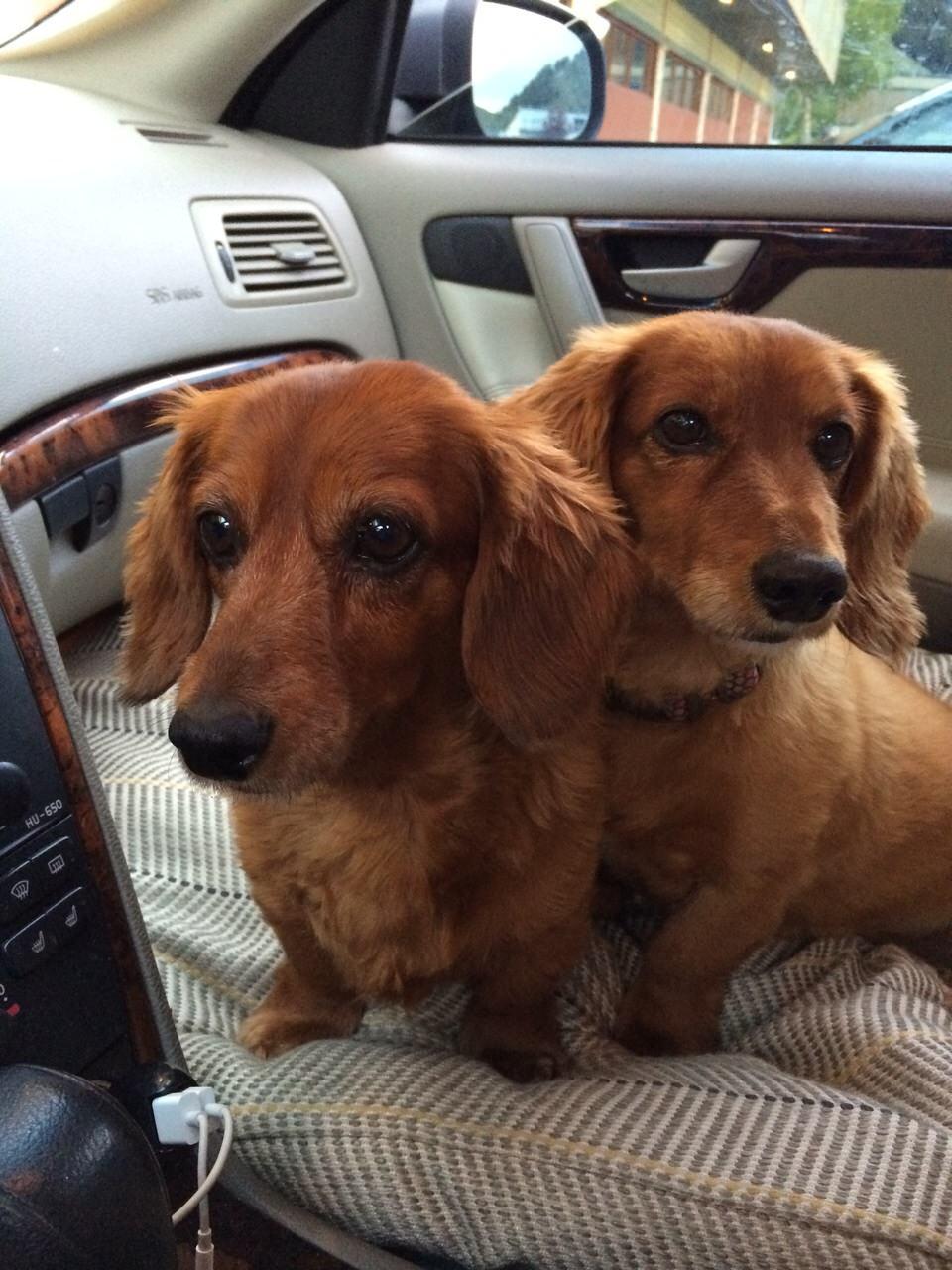 Maui Wiener Dogs