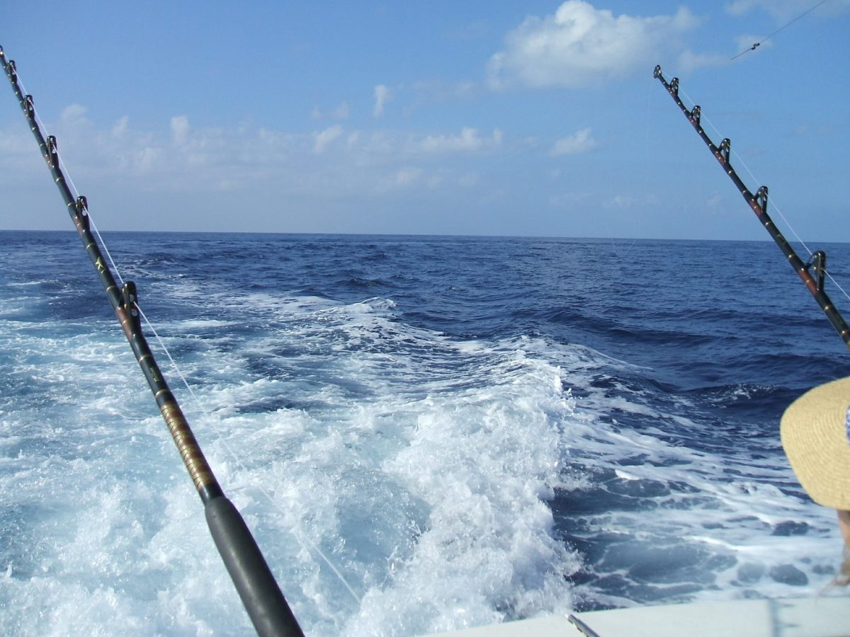 Maui Sea Fishing